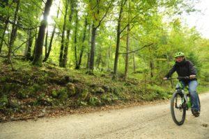 kolesarska-pot-kosec-v-gozdu_800x600