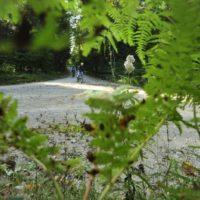 kolesarska-pot-scuka-v-gozdu_800x600