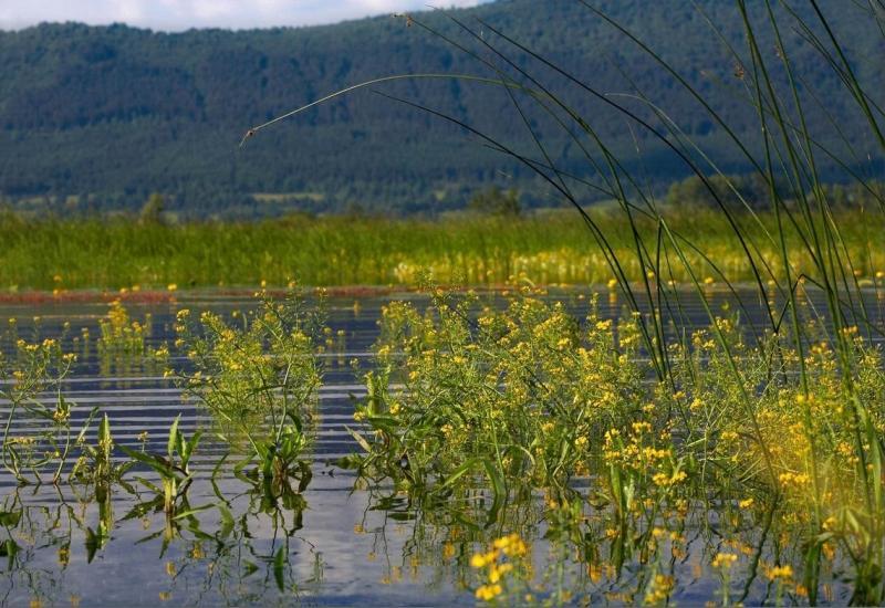 kolesarska-pot-srna-cerknisko-jezero-poleti_800x600