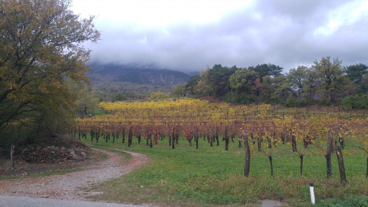 čudovit pogled na jesenske barve vinograda
